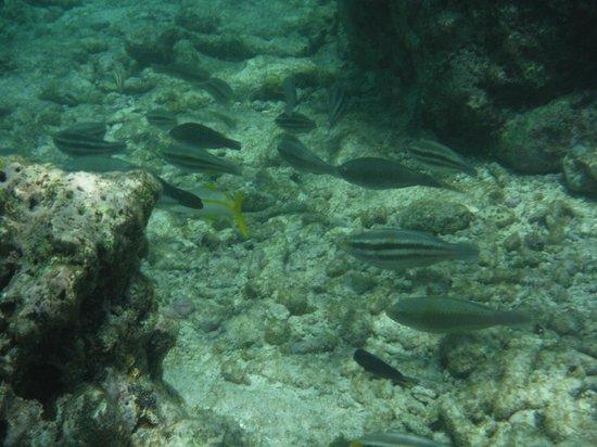 Strea Charters: Snorkeling at Mangel Halto Reef