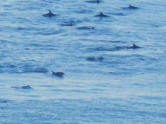 The Old Slaughterhouse : Hector Dolphins