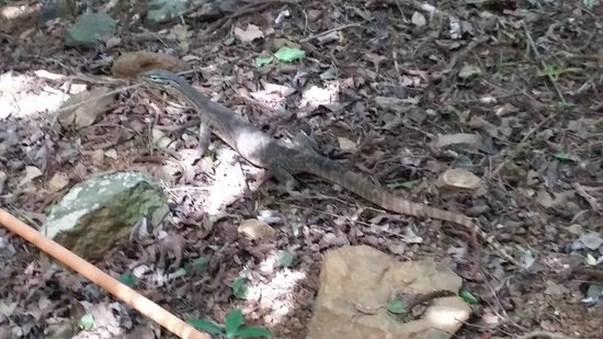 Daydream Island Resort & Spa: Some of the wildlife on the rainforest walk