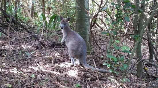 Daydream Island Resort & Spa : Some of the wildlife on the rainforest walk