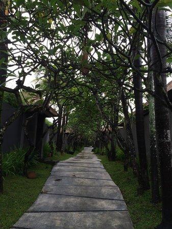 The Kayana Bali: Beautiful Frangipani trees leading to our private villa