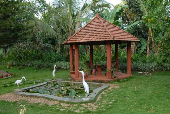 Bananki Homestay: The garden