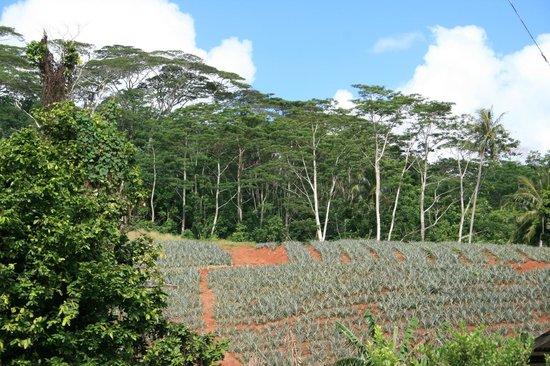 Village Temanoha : L'environnement (route des ananas)