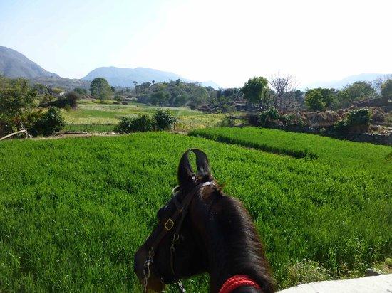 Princess Trails Farm: Traumhaftes Tal mit Marwariohren