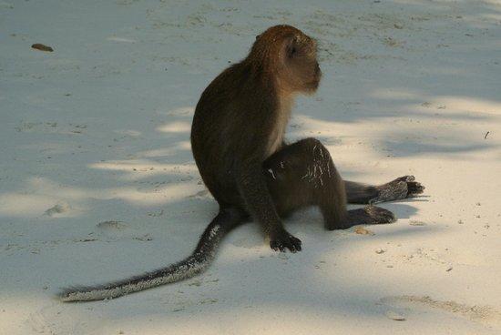 Simba Sea Trips: Just Chillin