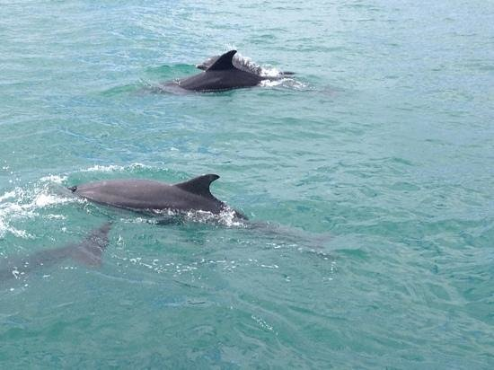 Marine Discovery: Dolphins showing off their baby