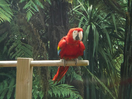 Rainbow Springs Nature Park : Beautiful parrot at Rainbow Springs