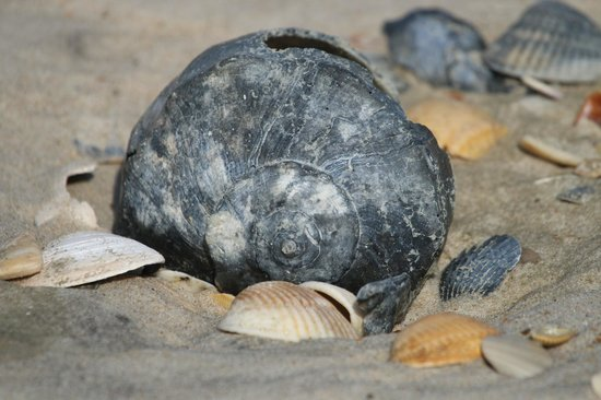 Beaufort Inn: Shells at your feet on nearby Shackleford Banks