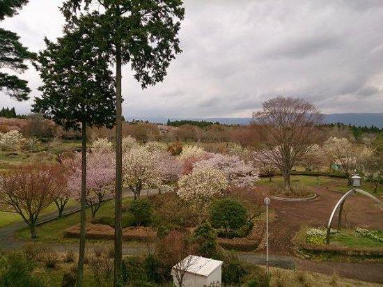 Ikoinomura : 自然が豊かでキレイです