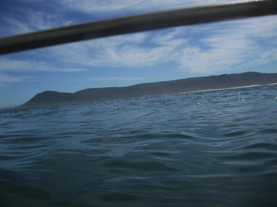 Marine Dynamics: Take an underwater camera!