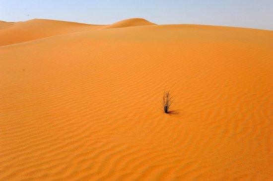 Qasr Al Sarab Desert Resort by Anantara: Passeggiata sulle dune