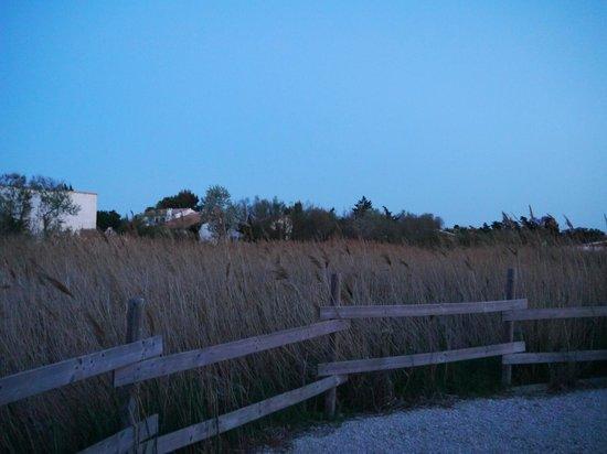 Le Mas de Cocagne : 敷地内から明け方の湿原を望む