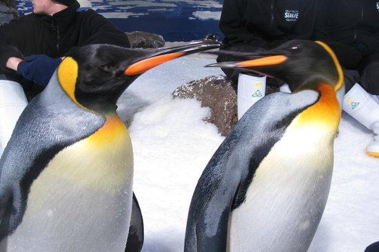 Kelly Tarlton's Sea Life Aquarium: Love at first sight!