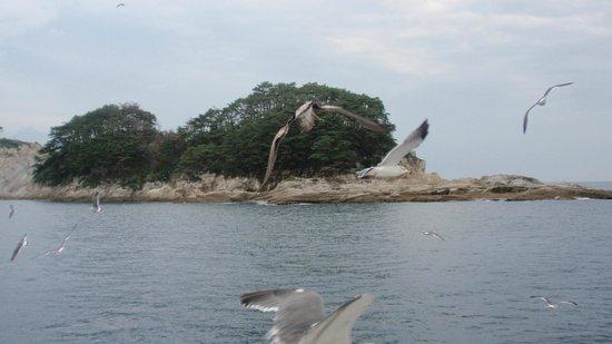 Miyako Jodogahama Boat Cruise : 浄土ヶ浜・・