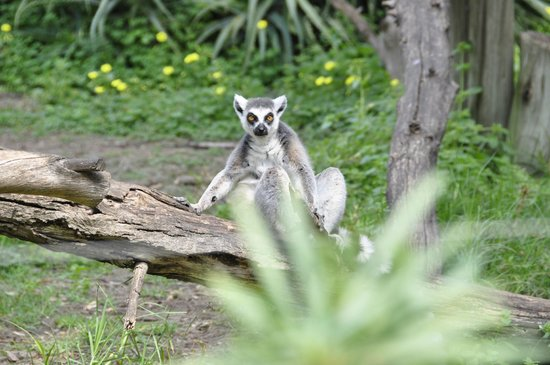 Safari Park: Глаза в глаза