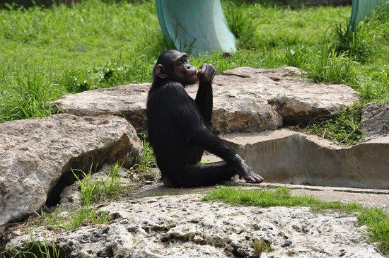Safari Park: Наблюдает за посетителями