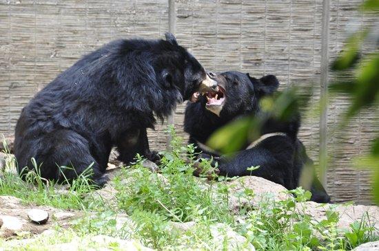 Safari Park: Медведи