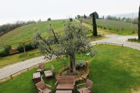 Le Fonti a San Giorgio: Tra ulivi e vigne