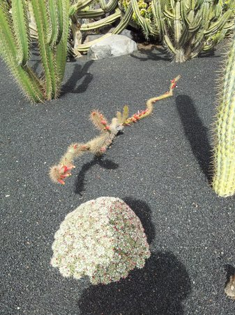 Jardin de Cactus : 3
