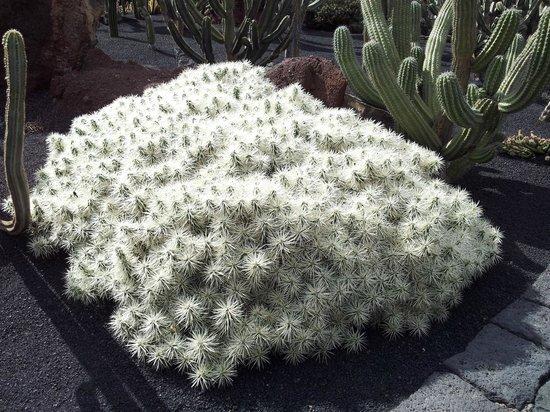 Jardin de Cactus : 6