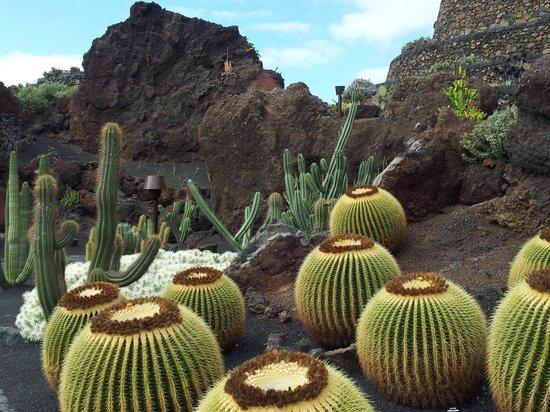 Jardín de Cactus: 2