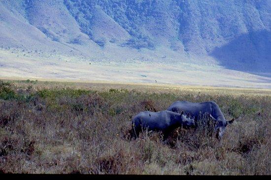 Empakaai Crater: rinoceronti