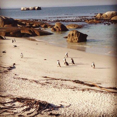 Bike and Saddle: Penguins at Simons Town