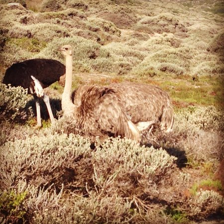 Bike and Saddle: Ostrich at Cape of Good Hope