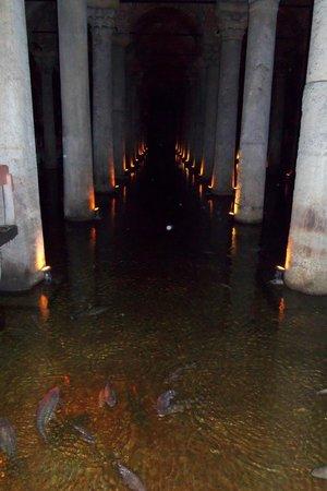 Citerne Basilique (Yerebatan Sarnıcı) : Fish Abound in the Cistern!