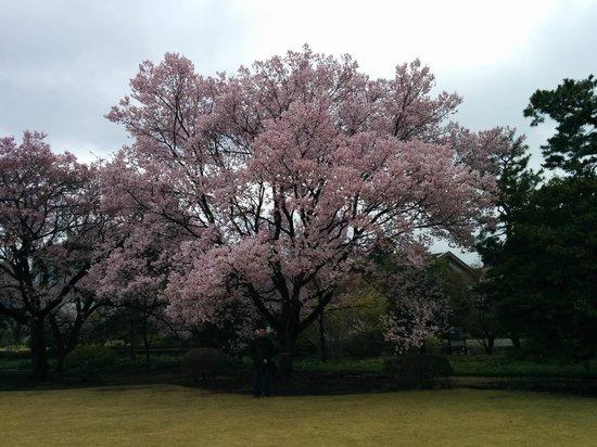 Giardino orientale del palazzo imperiale di tokyo foto for Giardino orientale