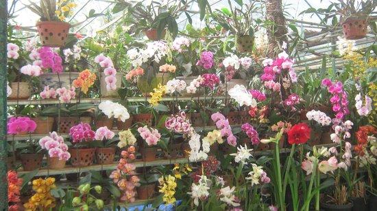 Dalat Flower Park : орхидеи в горшках