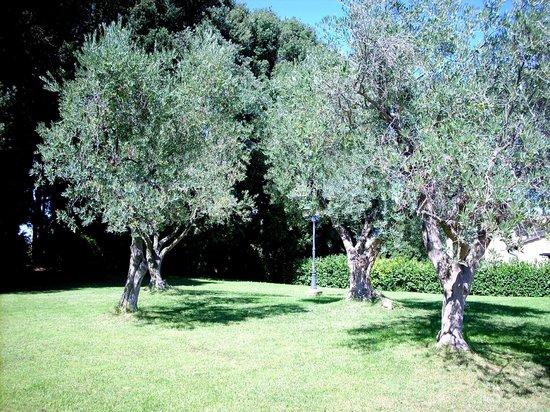 Hotel Villa Nencini: Una zona ombreggiata dagli ulivi