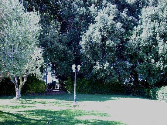 Hotel Villa Nencini: Gli ulivi del piccolo parco/piscina