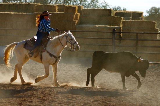 Team Penning Picture Of White Stallion Ranch Tucson