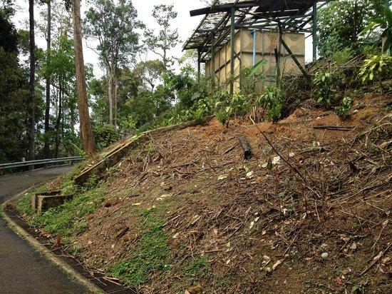 Colmar Tropicale, Berjaya Hills: Area where the bamboo has been cut down.