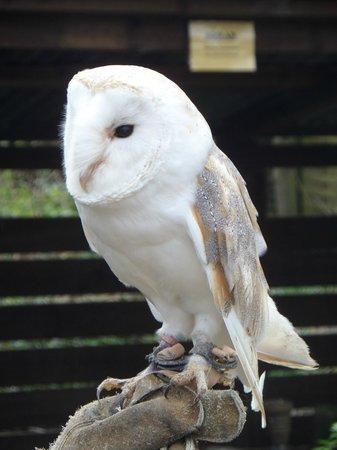 The Rutland Falconry and Owl Centre: Beautiful colours