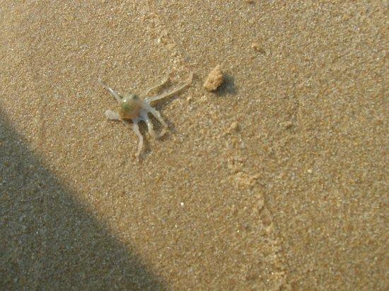 Sasco Blue Lagoon Resort: случайно поймали в раковине осьминожка