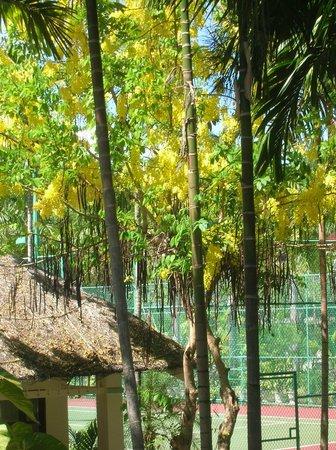 Sasco Blue Lagoon Resort: на территории отеля