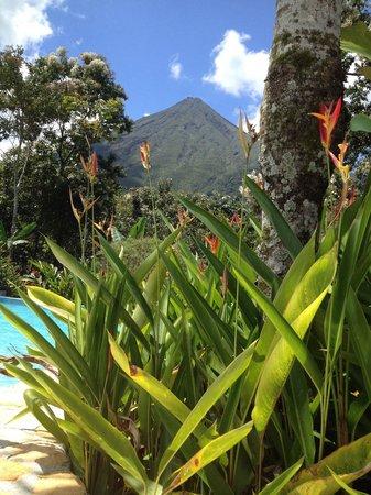 Hotel Lomas del Volcan: Vista del Volcán desde la piscina de Lomas del Volcán !