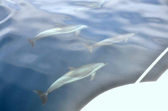 Isla de la Plata : Delfines