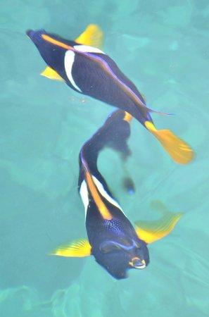 Isla de la Plata : Peces