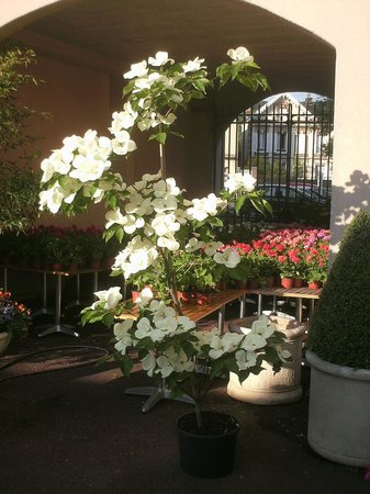 Le Cottage : Cottage Flowers 1