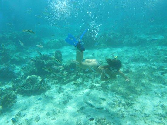 Aragusuku Beach: Underwater...