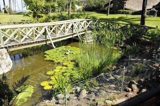 La Pirogue Resort & Spa : полянка frangipani