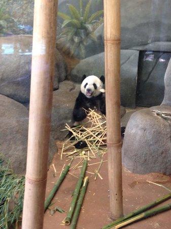 Memphis Zoo: So cute!