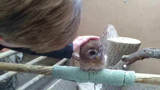 Small Breeds Farm Park and Owl Centre: cute woodford owl