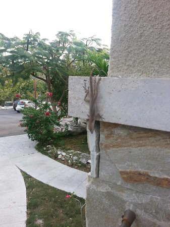 One On Marlin: Morning visit from Gecko