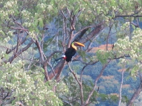 TikiVillas Rainforest Lodge: Toucan spotted while at the pool