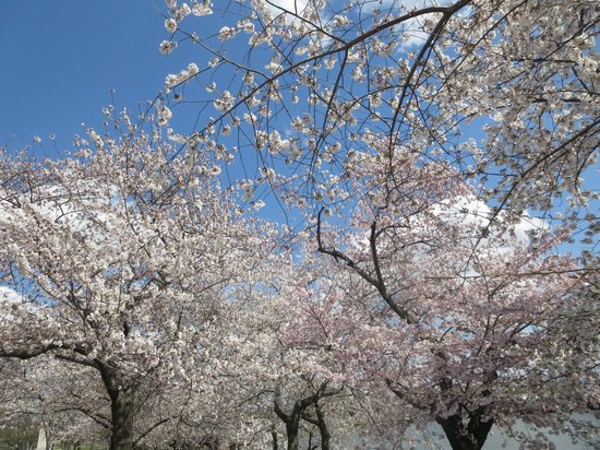 Tidal Basin: sun makes Such a difference