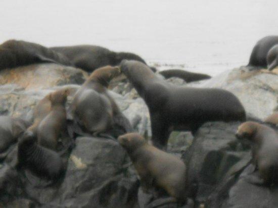 Faro Les Eclaireurs: Isla de los Lobos